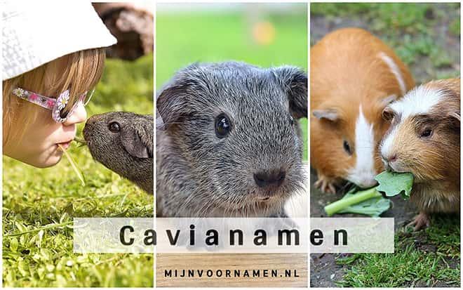 Cavianamen
