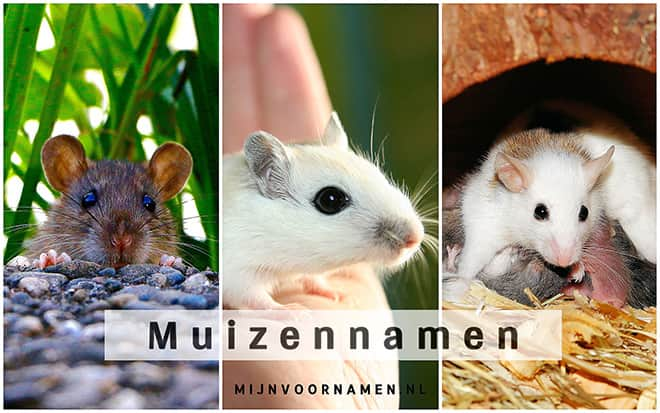Muizennamen