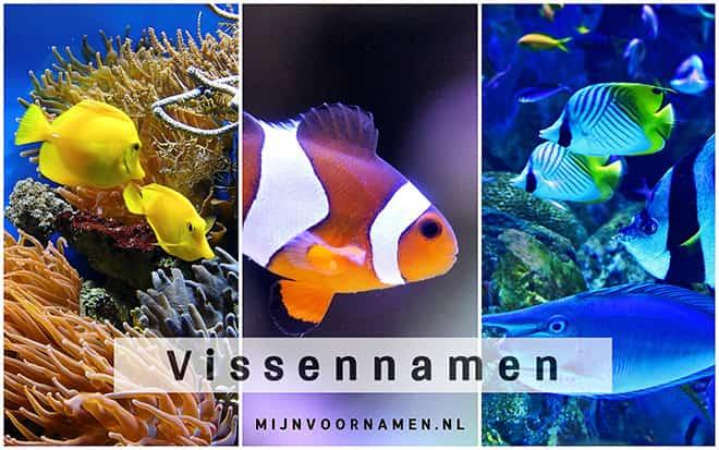 Vissennamen